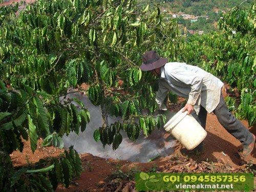 Bón vôi và lân là biện pháp giúp điều chỉnh pH của đất trồng