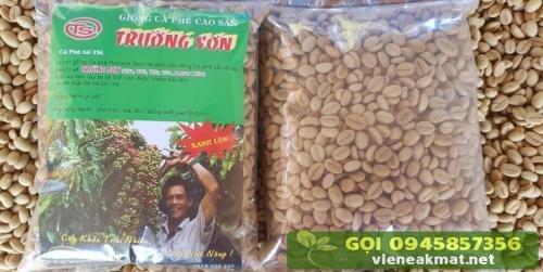 Hạt giống cà phê xanh lùn TS5